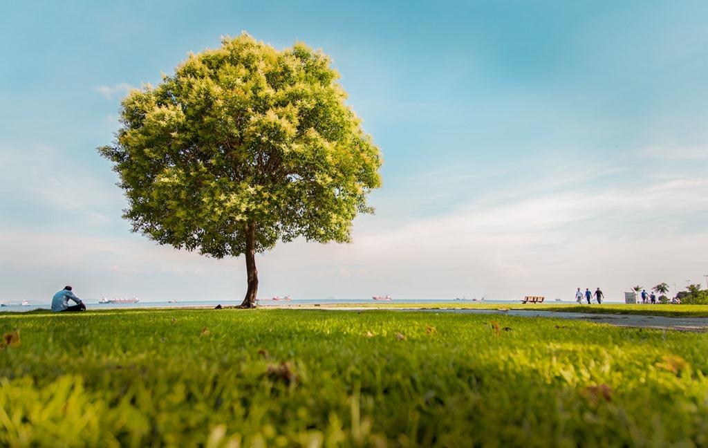 árbol.jpg