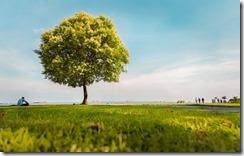 árbol_thumb.jpg