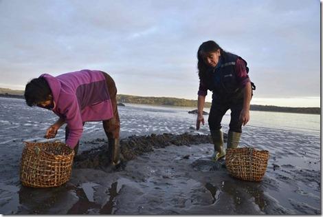 Recolectoras de orilla 2 - Foto Aqua.cl